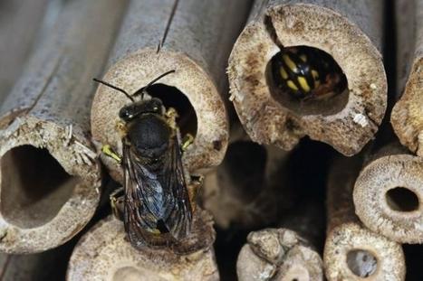 Vincent Albouy, entomologiste / France Inter   EntomoScience   Scoop.it