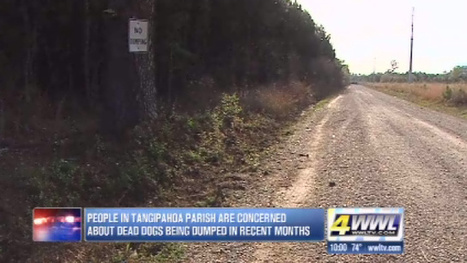 Officials believe dog fighting may be behind dumping of dogs in Tangipahoa | Animal Rights | Scoop.it