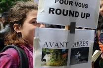#France bans sale of #Monsanto #herbicide #Roundup in nurseries. We need a total ban! #FF | Messenger for mother Earth | Scoop.it