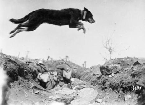 11 Dramatic Photos from World War I | We Teach Social Studies | Scoop.it
