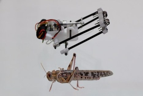 Search-and-rescue robot could give locusts a better name   Dernières innovations technologiques   Scoop.it