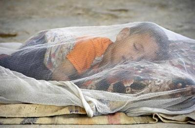 Paludisme: la mortalité mondiale chute de 60% en 15 ans | Le Quotidien du Pharmacien | Actualités Santé | Scoop.it