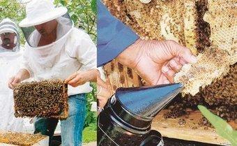 Le miel, l'happy culture du fenua - Les Nouvelles Calédoniennes | Abeilles, intoxications et informations | Scoop.it