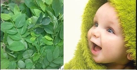 Cách đánh tưa lưỡi (rơ lưỡi) cho trẻ sơ sinh bằng rau ngót | Mật ong Hưng Yên | Scoop.it