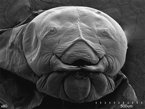 » Scorpions, Spiders and Sharks: Electron-Microscope Images   In Today's News of the Weird   Scoop.it