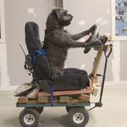 Rescue Dogs Taught How To Drive A Car | engineeringlots | Scoop.it