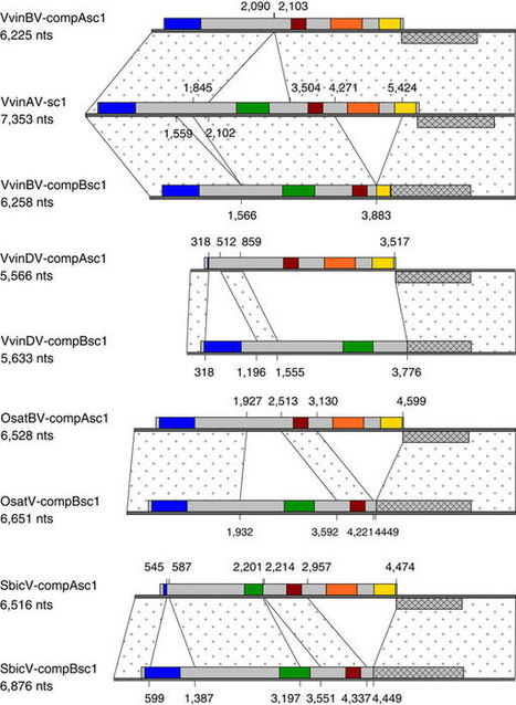 Endogenous florendoviruses are major components of plant genomes and hallmarks of virus evolution | Virology and Bioinformatics from Virology.ca | Scoop.it