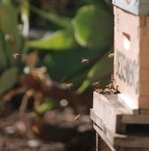 Want to Keep Bees or Chickens in Boston? Now, There are Rules - Patch.com | Vertical Farm - Food Factory | Scoop.it