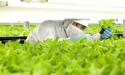 JIC mention: Automated farming: good news for food security, bad news for job security? | BIOSCIENCE NEWS | Scoop.it