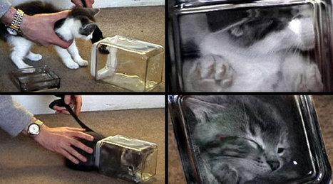 Los Gatos Bonsái | Los gatos | Scoop.it