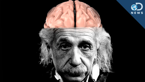 How Einstein's Brain Is Different Than Yours | Curiosités scientifiques | Scoop.it