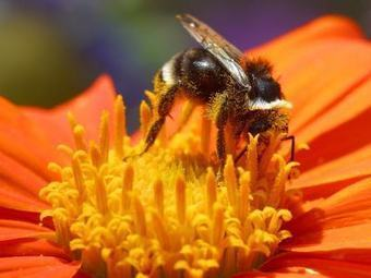 SAVE THE BEES, SAVE THE BERRIES, SAVE ME | YOUR FOOD, YOUR ENVIRONMENT, YOUR HEALTH: #Biotech #GMOs #Pesticides #Chemicals #FactoryFarms #CAFOs #BigFood | Scoop.it