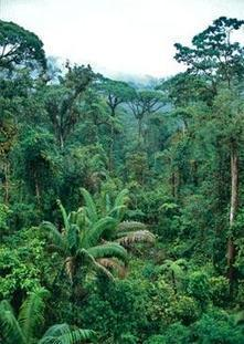 Climate change crisis for rainforests : Nature News | Rainforests - Global environments | Scoop.it