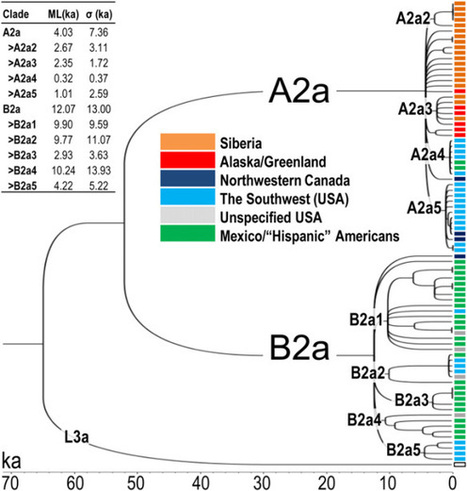 Native American Maternal Haplogroup A2a and B2a Dispersion | Mixed American Life | Scoop.it