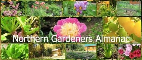 Northern Gardeners Almanac What's growing in northern gardens | Annie Haven | Haven Brand | Scoop.it
