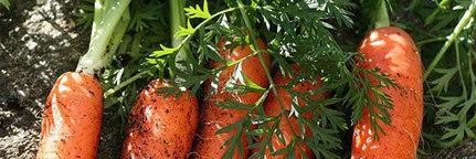 Gaspillage alimentaire : pourquoi manger des légumes inesthétiques