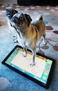 איך מפרסמים גאדג'טים? עם כלבים וחתולים | נדב רביב | Scoop.it