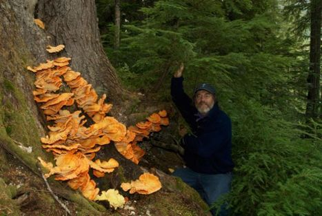 Paul Stamets video collections on how mushrooms can save the world | Wild Foraged Foods | Scoop.it