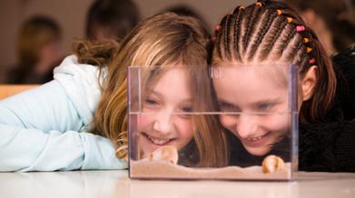 Parents - ABC Splash | parent guide to australian curriculum | Scoop.it