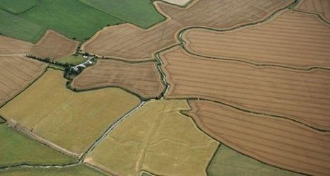 Satellite Crop Monitoring: Vegetation Control | Precision Agriculture | Geoflorestas | Scoop.it