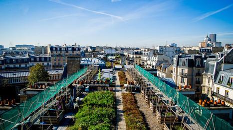 Les légumes cultivés sur les toits sont-ils mangeables ? | Agriculture urbaine et rooftop | Scoop.it
