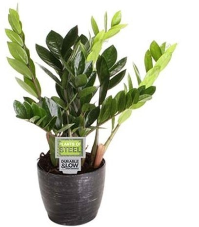 Easy Tips for Dorm Room Plants From Costa Farms | Garden Media Group | Scoop.it