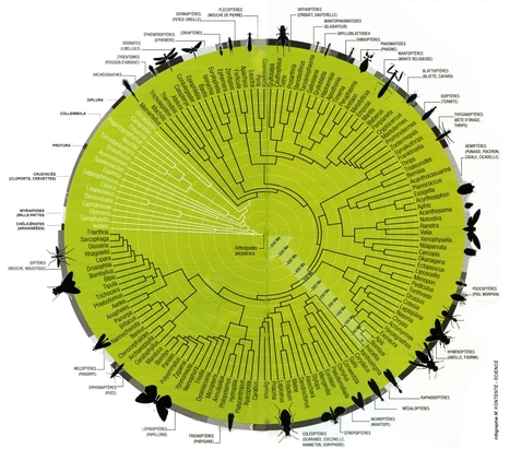 Arbre phylogénétique des Insectes | Insect Archive | Scoop.it