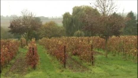 Le vin belge, un marché en plein essor - RTBF Economie | Le vin quotidien | Scoop.it