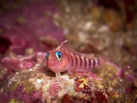 Point & Shoot Underwater Photography | Dive Mistress | Indigo Scuba | Scoop.it