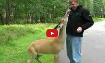 A Couple Was Walking In The Park, Until They Met The Friendliest Deer.  Look What Happened! | Walking On Sunshine | Scoop.it