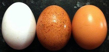 ¿Cuántos huevos puedes comer? Mitos sobre este nutritivo alimento derrumbados con estudios científicos | Salud&Medicina | Scoop.it