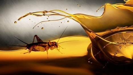 Insect oil: Bugs aren't just about protein   UsagesBSF   Scoop.it