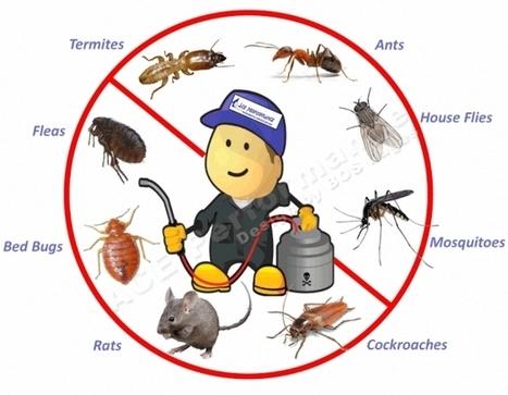 شركة مكافحة حشرات بمكه والمدينه | شركة تنظيف خزانات بالرياض | Scoop.it