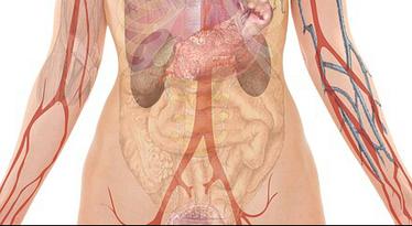 Gastroparesis | Gastroparesis & Digestive Dysmotility | Scoop.it