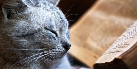 5 Ways to Use Storytelling to Celebrate Your Cat's Life | Catster (blog) | A Cat's Life | Scoop.it