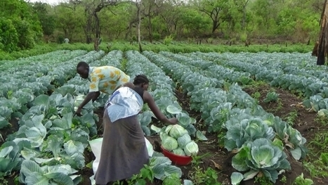 With Cash And Skills Training, South Sudanese Women Carve Path To Food Security And Economic Empowerment | Education in South Sudan | Scoop.it