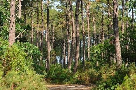 Les débuts hésitants du mécénat forestier | Infos sur les fonds de dotation | Scoop.it
