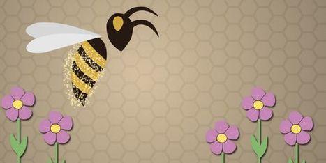 Le déclin des abeilles expliqué en 3 minutes | Pour une agriculture et une alimentation respectueuses des hommes et de l'environnement | Scoop.it
