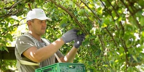Le baby kiwi Nergi dépasse ses prévisions | Arboriculture: quoi de neuf? | Scoop.it