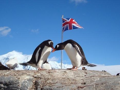 Antarctic British Base 'A' star of BBC Natural World Documentary | Antarctica | Scoop.it