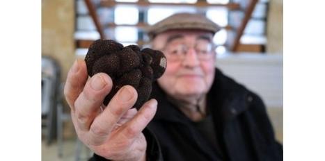A Saint-Alvère, la truffe noire ne connaît pas la crise | BIENVENUE EN AQUITAINE | Scoop.it