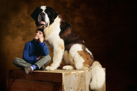 Une pétition pour rappeler que les animaux ne sont pas des meubles - Magazine GoodPlanet Info   problématique   Scoop.it