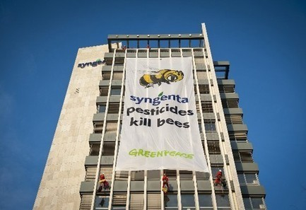 Greenpeace: Syngenta Pesticides Kill Bees | EcoWatch | Scoop.it