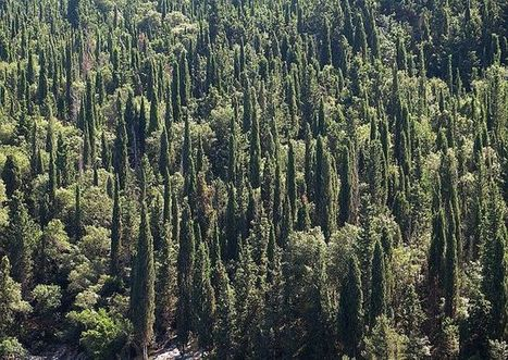 These tress can survive a forest fire - Mother Nature Network | Sustainable Forestry | Scoop.it
