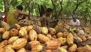 Amazonie : des agriculteurs oeuvrent pour le reboisement - BFMTV | Agriculture Biologique | Scoop.it