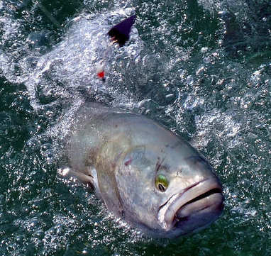 Success story: Cleaner bluefish show effectiveness of US coal regulations, study says — Environmental Health News | Farming, Forests, Water & Fishing (No Petroleum Added) | Scoop.it