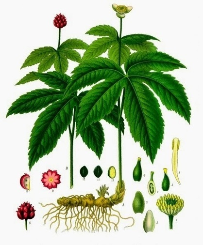 Did You Know? ~ Goldenseal | History & Romance | Scoop.it