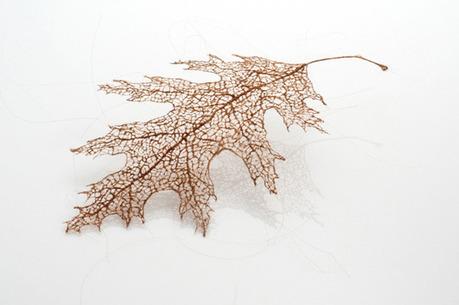 Des feuilles recréées à partir de cheveux, vraiment impressionnant ! | Coiffeurs : dernières tendances, bons plans et bonnes adresses | Scoop.it