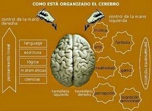 Cinco ejercicios para nivelar tu hemisferio lógico con tu hemisferio creativo.   Fun facts   Scoop.it