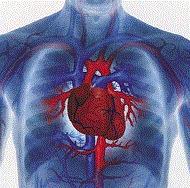Survival predictors of cardiac arrest in the ICU | BlablaDoctor | Scoop.it